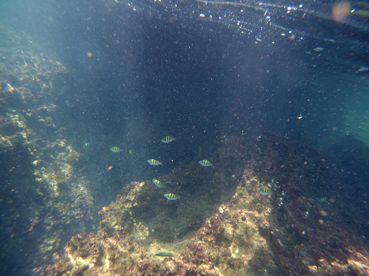 Yi_camera กับอุปกรณ์กันน้ำไปดูปะการั